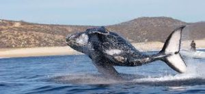 whale mx